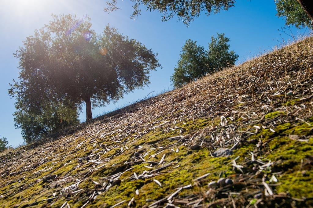 fotos finca ecologica en Jaen aceite de oliva