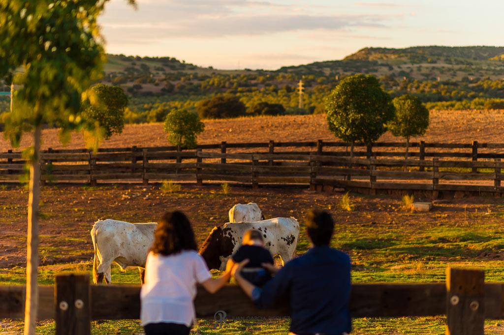 Familia contemplando las vacas mientras pastan
