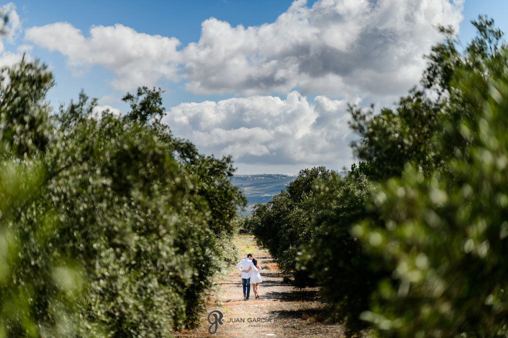 Fotografías de novios caminando entre los olivos